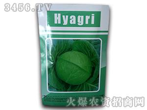Hyagri-甘蓝种子