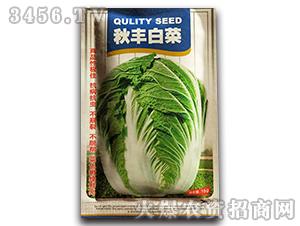 秋丰白菜-白菜种子-沃福鑫