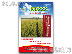 长5222-小麦种子-连发农业