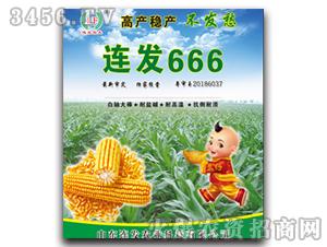 连发666-玉米杂交种-连发农业