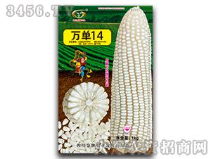 万单14-玉米种子-金牌农业