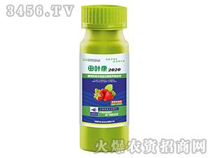 草莓专用植物羧基末端蛋白酶营养稳定剂-田叶康2020-茂