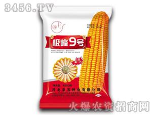 极峰9号-玉米种子-京石种业