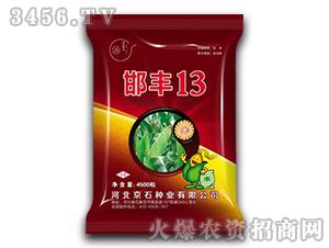 邯丰13-玉米种子-京石种业