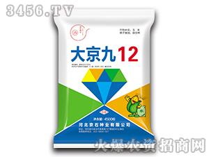 大京九12-玉米种子-京石种业