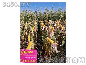吉单551-玉米种子-吉农