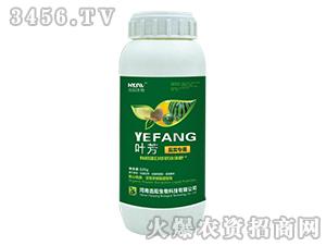 瓜类专用液肥-叶芳-浩阳生物