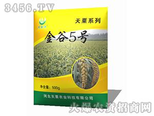 金谷5号-谷子种子-天粟农业