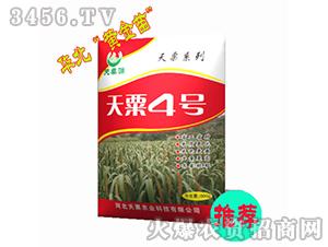 天粟4号-谷子种子-天粟农业