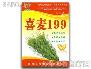 喜麦199-小麦种子-喜得粮