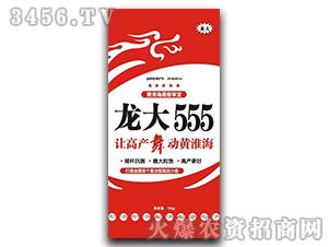 龙大555-小麦种子-龙大种业