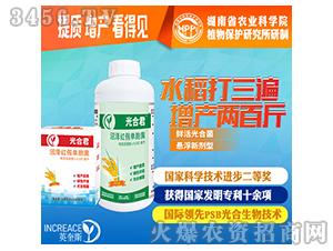 水稻增产-微生物菌剂-光合君-光合细菌