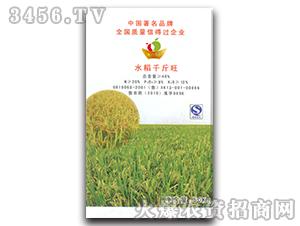 水稻千斤旺-金果圣宝-耕鑫农业