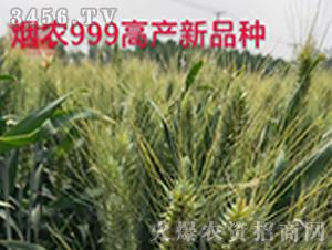 烟农999高产新品种