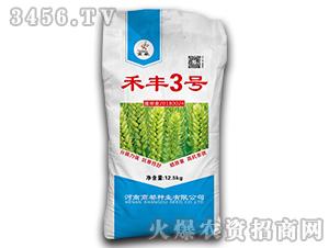 禾丰3号-小麦种子-商都种业