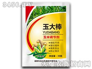玉米调节剂-玉大棒-德广生物