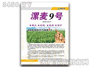 漯麦9号-小麦种子-豫穗农业
