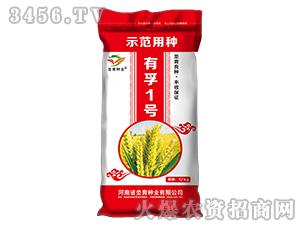 有孚1号-小麦种子-�h育种业