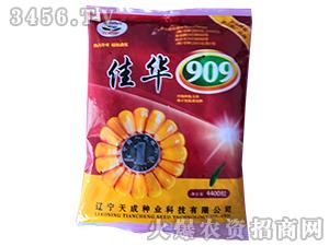 佳华909-玉米种子-天成种业