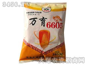 万育6605-玉米种子-天成种业