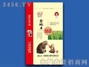 鑫地丰168-小麦种子-地丰种业