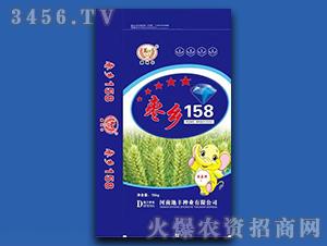 枣乡158(蓝色)-小麦种子-地丰种业