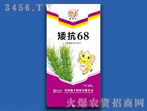 15kg矮抗68-小麦种子-地丰种业