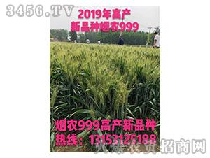 2019高产新品种烟农999