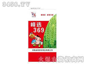 峰选369小麦种子-国奇-家家旺
