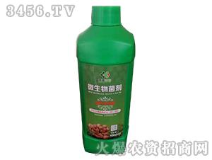 大姜专用微生物菌剂-宸青生物