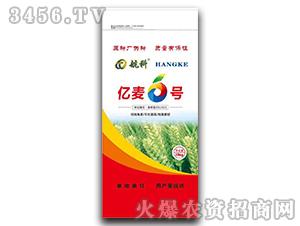 亿麦6号-小麦种子-豫鑫博