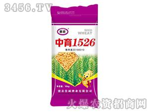 中育1526-小麦种子-佳硕种业