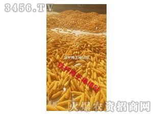 铁杆棒王玉米种子实物图