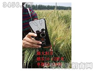小麦种效果反馈图2