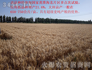 小麦种效果反馈图3