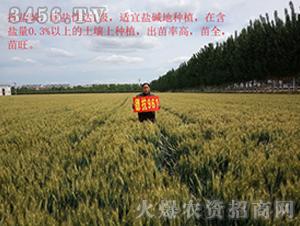 小麦种效果反馈图6