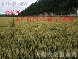 德抗961—高产稳产抗盐碱小麦品种