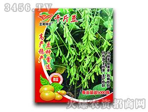千斤豆-大豆种子-坔育种业