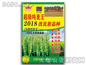 超级吨麦王2018改良新品种-小麦种子-种旺农业