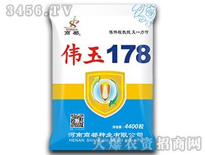伟玉178-玉米种子-商都种业