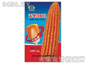 天单1001-玉米种子-金牌农业