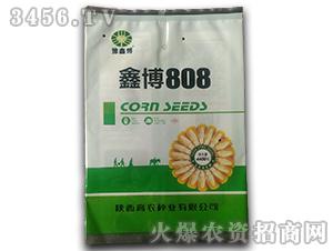 鑫博808-玉米种子-豫鑫博