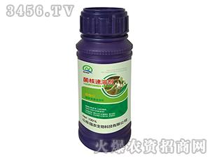100ml菌核速溶剂-强农生物