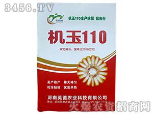 机玉110-玉米种子-喜得粮