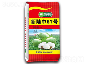 新陆中67号-棉花种子-冠王花