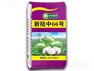 新陆中66号-棉花种子-冠王花