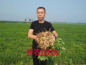 开农0316-硕华农业(效果图)-喜得粮