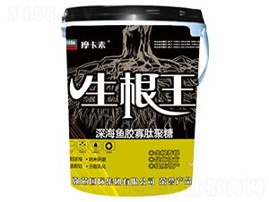 生根王-摩卡素-强芯国际