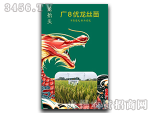 广8优龙丝苗-龙抬头-兆和种业