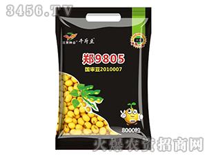 郑9805-大豆种子-�h育种业